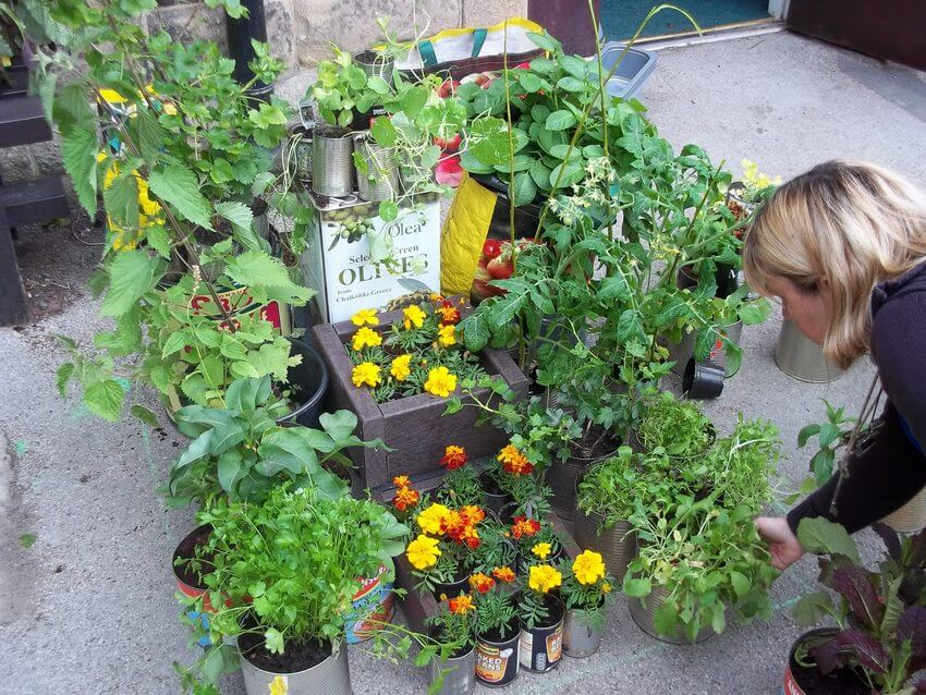 Hebden Royd-School Planters-Budding Gardeners Competition