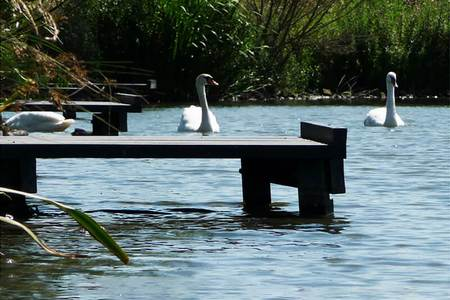 A fishing platform on a lake with swans