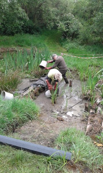Volunteers bail water from between temporary dams.