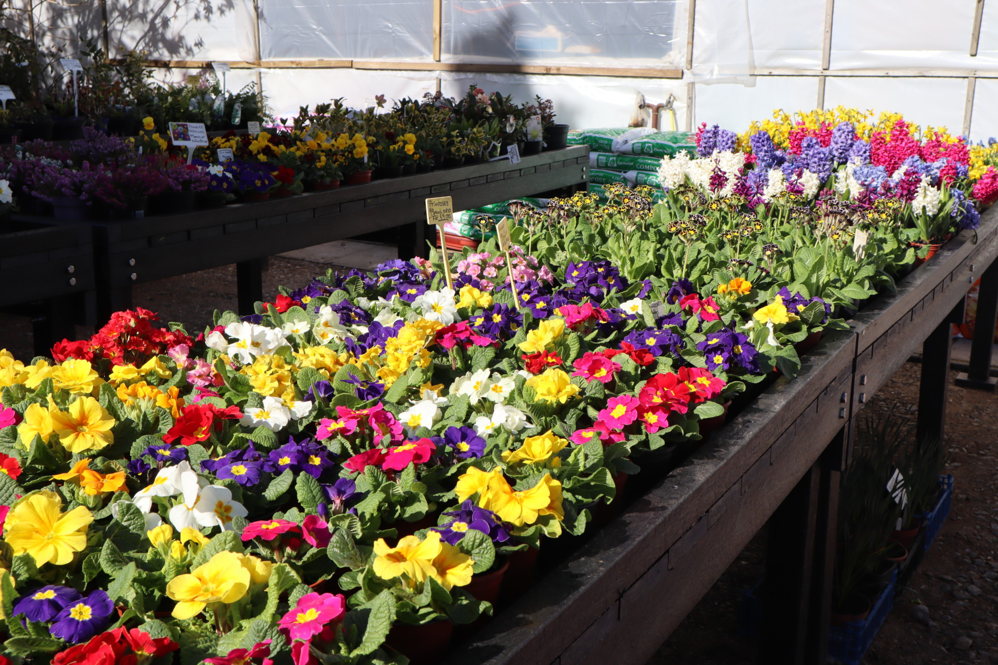 Colourful bedding plants displayed on recycled plastic tables at Greensleeves Nursery.