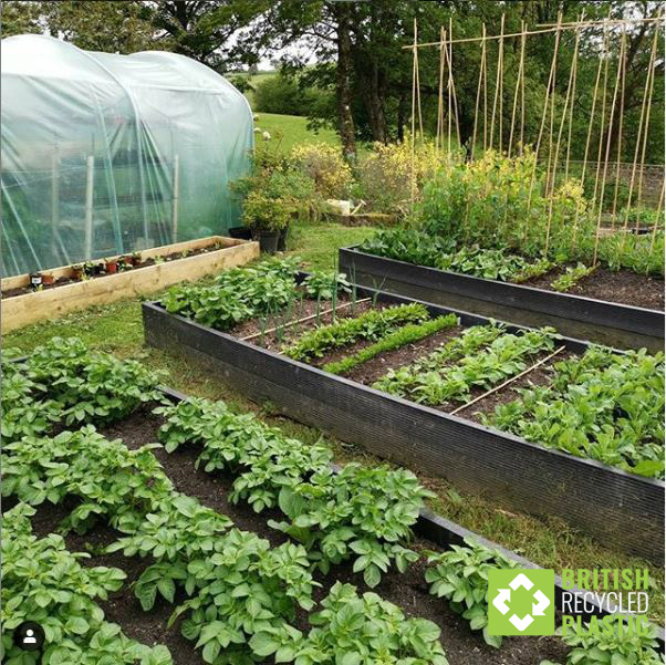 it's all grow at Huw's Nursery! vegetables growing in Huw Richard's recycled plastic raised beds