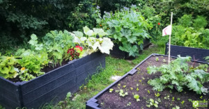 Raised beds at Redacre, full of plants