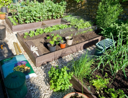 Creative Raised Bed Design