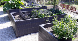 Image shows several BRP recycled plastic raised beds with produce. Some of the plants are netted to protect them from birds.