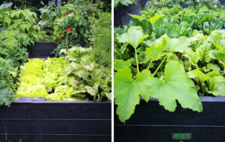 Image shows 2 BRP recycled plastic raised beds, bursting with produce.