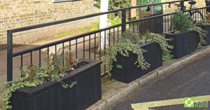 First year's growth in smog shield planters at Goose Green School