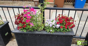 Smog shield planters in full bloom. Engineered from British Recycled Plastic at Goose Green School 03
